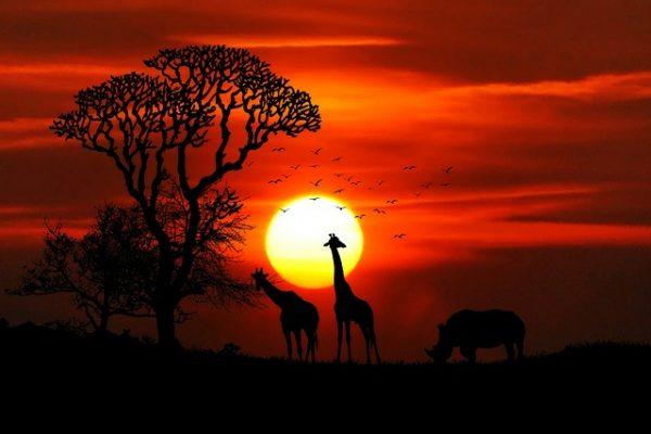 africa-travel-clinic-toronto